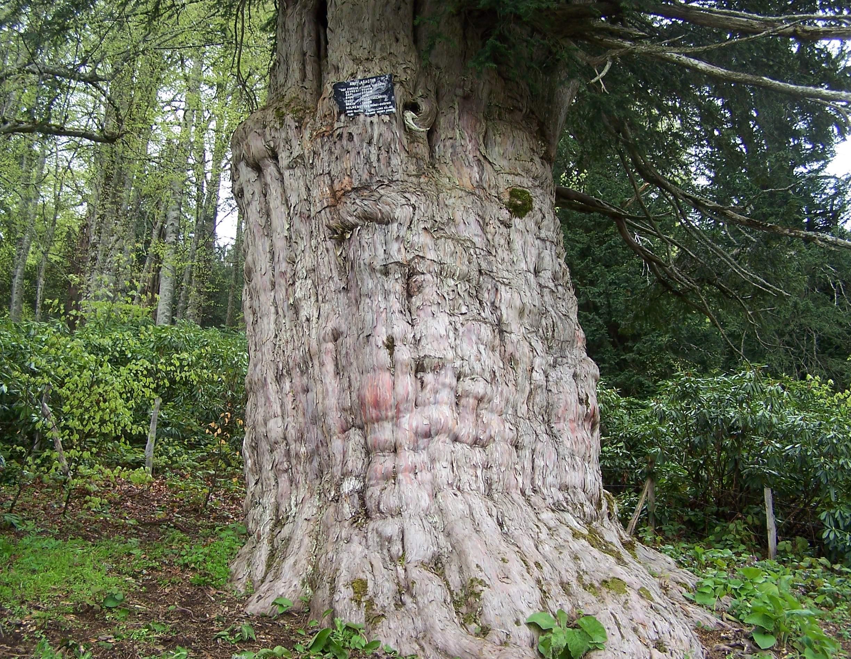 【En çok aranan】 Yapraksız Ağaç Boyama