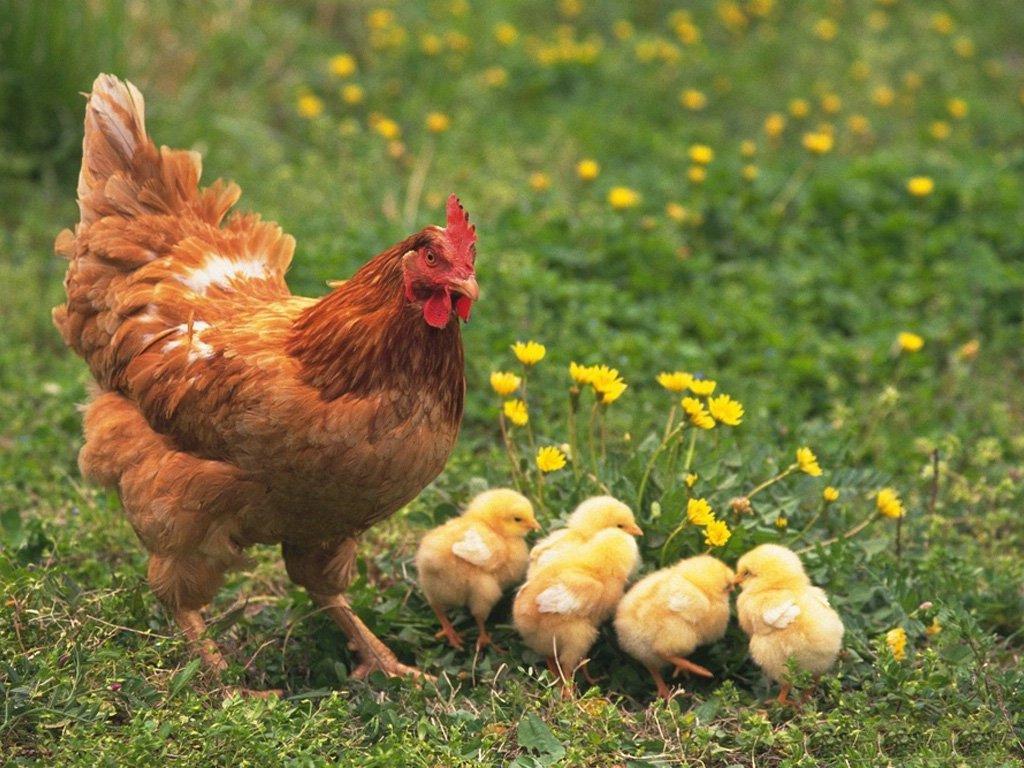 Rüyada Yumurta Görmek Almak Pişirmek ve Yemek Ne Anlama Gelir