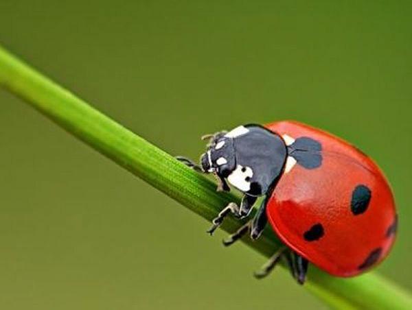 Bir rüyadaki hamamböceği öldür - neden böyle bir rüya